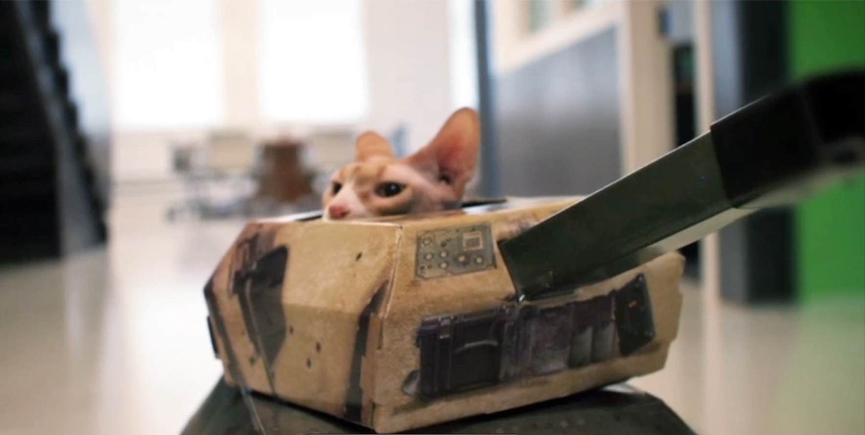 Cats in Tanks –James Dierx at the Whitehouse Post at Chicago, Los Angeles